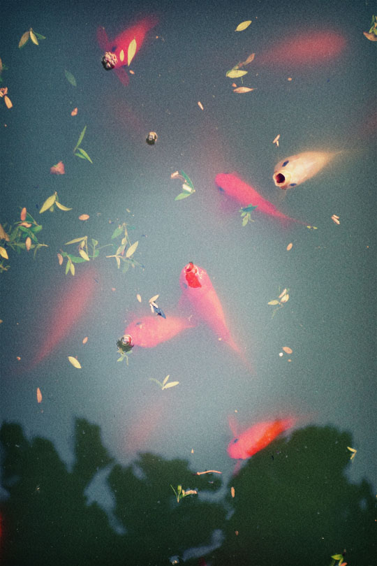 36_poissons