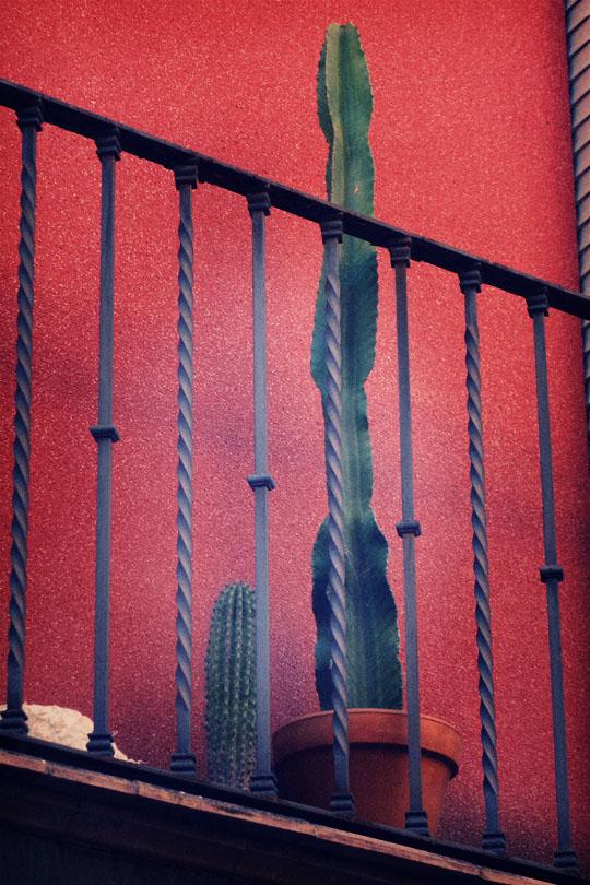 14_cactus