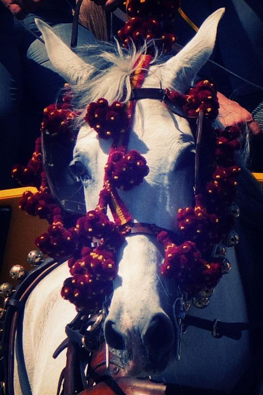41_cheval-caleche