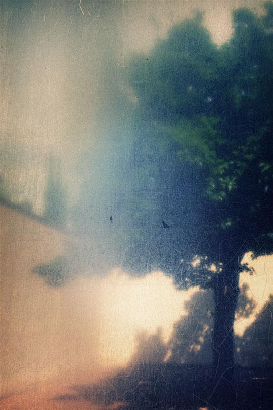 50_arbre